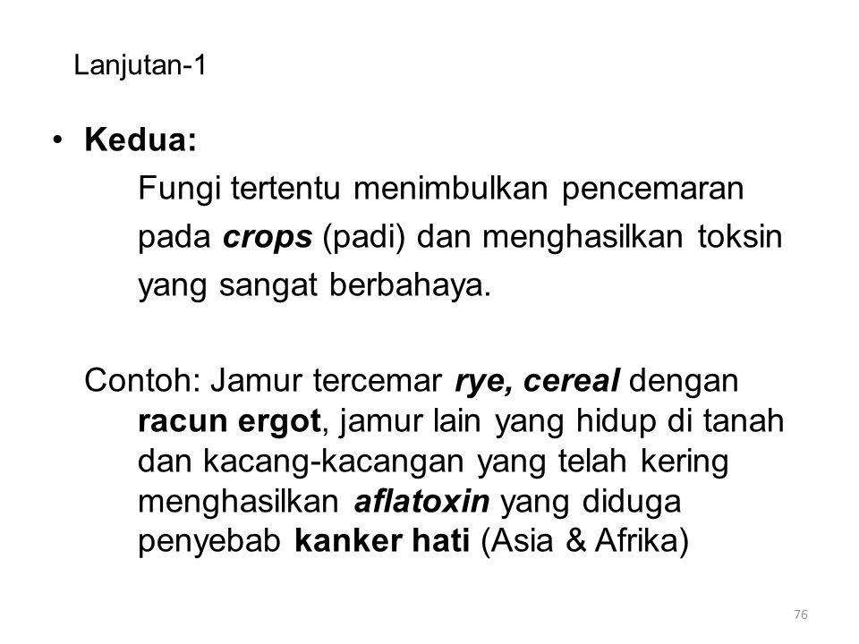 Lanjutan-1 Kedua: Fungi tertentu menimbulkan pencemaran pada crops (padi) dan menghasilkan toksin yang sangat berbahaya. Contoh: Jamur tercemar rye, c
