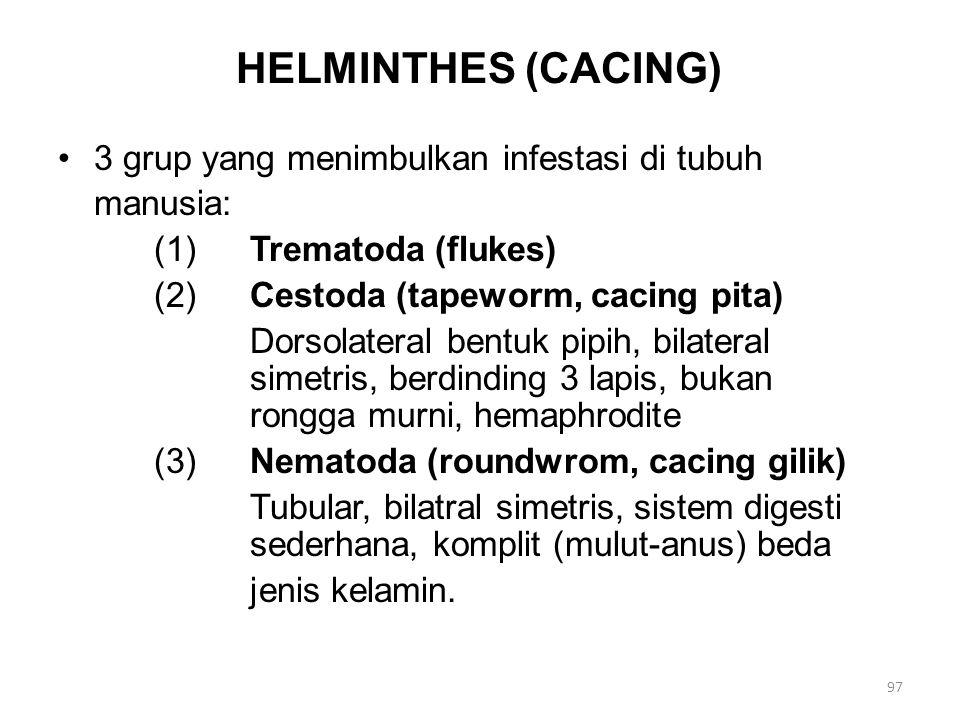 HELMINTHES (CACING) 3 grup yang menimbulkan infestasi di tubuh manusia: (1)Trematoda (flukes) (2)Cestoda (tapeworm, cacing pita) Dorsolateral bentuk p
