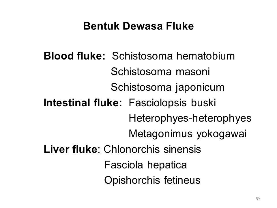 Bentuk Dewasa Fluke Blood fluke: Schistosoma hematobium Schistosoma masoni Schistosoma japonicum Intestinal fluke: Fasciolopsis buski Heterophyes-hete