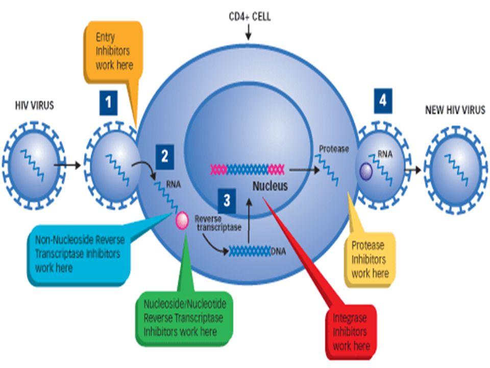 Obat-obat ARV NRTINNRTIPI Zidovudin (AZT) Lamivudine (3Tc) Stavudine (d4T) Didanosine (ddI) Abacavir (ABC) Nevirapine (NVP) Efavirenz (EFV) Saquinavir (SQV) Indinavir (IDV) Nelfinavir (NFV) Lopinavir/Ritonavir (LPV/r) Amprenavir (AMV)