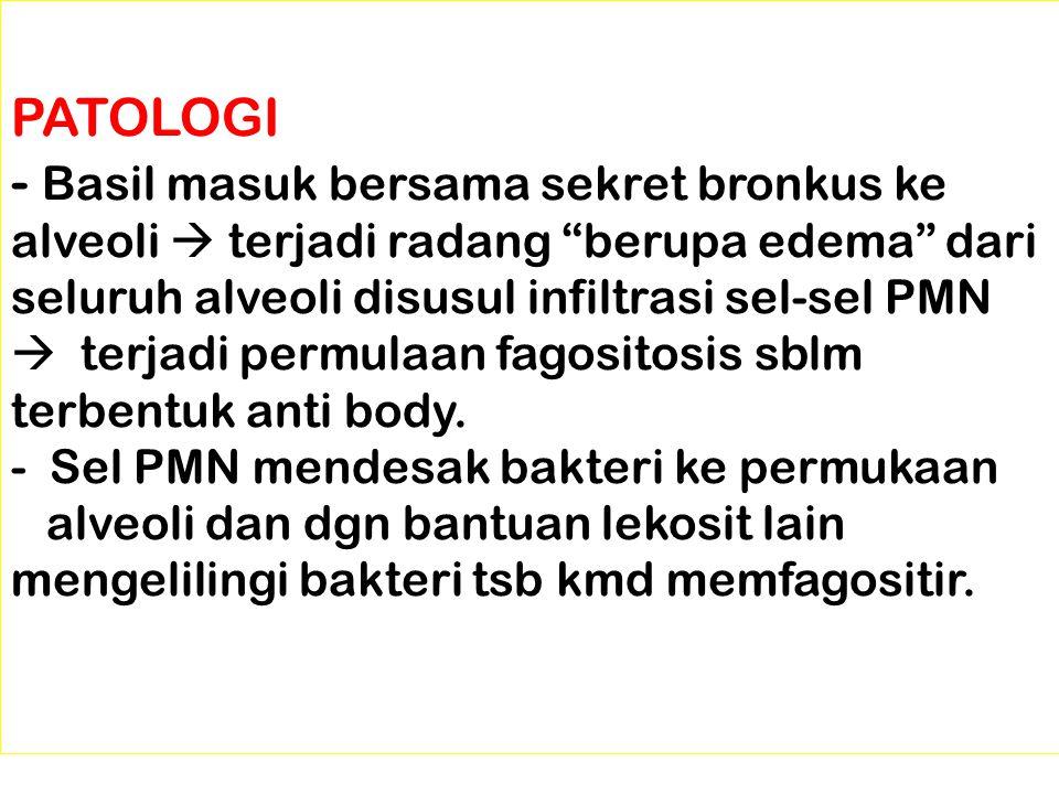"""PATOLOGI - Basil masuk bersama sekret bronkus ke alveoli  terjadi radang """"berupa edema"""" dari seluruh alveoli disusul infiltrasi sel-sel PMN  terjadi"""