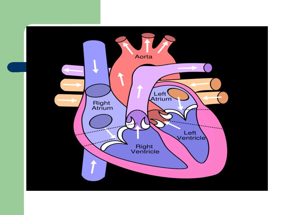 BUNYI JANTUNG II Intensitas BJ II aorta akan bertambah pada : – hipertensi – arterisklerosis aorta yang sangat.