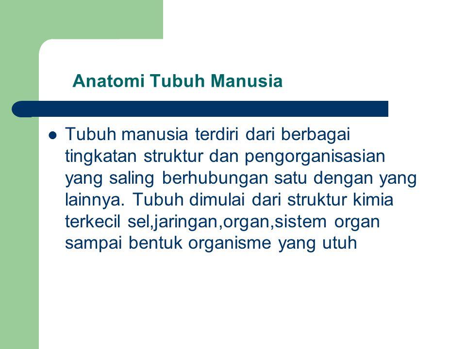 Anatomi Tubuh Manusia Tubuh manusia terdiri dari berbagai tingkatan struktur dan pengorganisasian yang saling berhubungan satu dengan yang lainnya. Tu