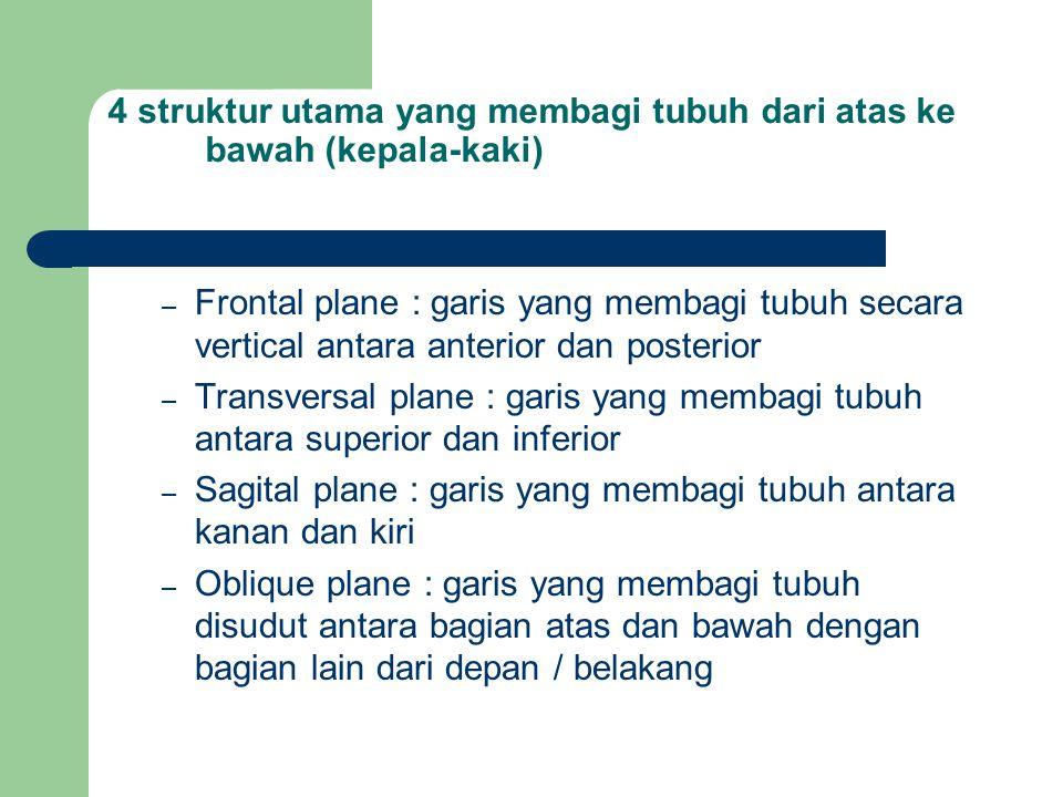4 struktur utama yang membagi tubuh dari atas ke bawah (kepala-kaki) – Frontal plane : garis yang membagi tubuh secara vertical antara anterior dan po