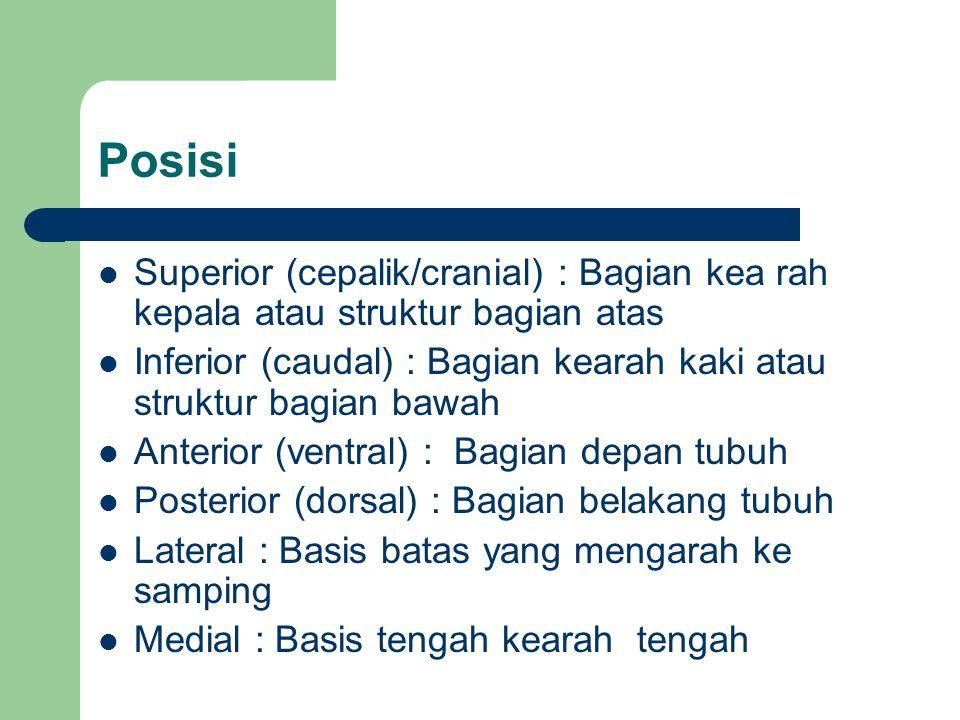 Posisi Superior (cepalik/cranial) : Bagian kea rah kepala atau struktur bagian atas Inferior (caudal) : Bagian kearah kaki atau struktur bagian bawah