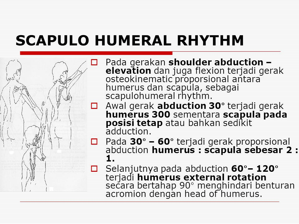 SCAPULO HUMERAL RHYTHM  Pada gerakan shoulder abduction – elevation dan juga flexion terjadi gerak osteokinematic proporsional antara humerus dan scapula, sebagai scapulohumeral rhythm.