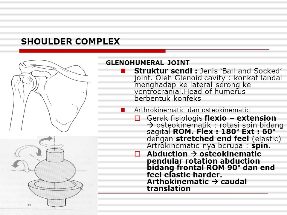 SHOULDER COMPLEX GLENOHUMERAL JOINT Struktur sendi : Jenis 'Ball and Socked' joint.