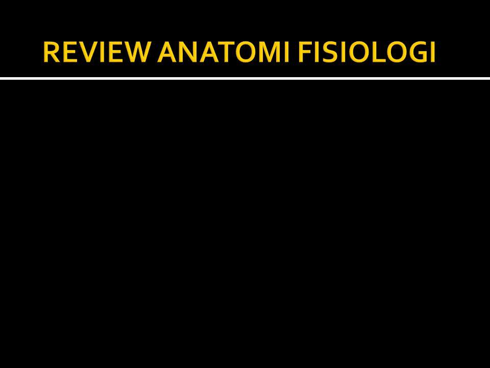  Tulang berasal dari embrionic hyaline cartilage melalui proses Osteogenesis .