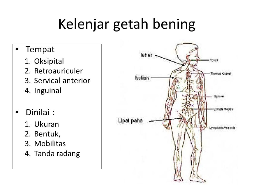 Kelenjar getah bening Tempat 1. 2. 3. 4. Oksipital Retroauriculer Servical anterior Inguinal Dinilai : 1. 2. 3. 4. Ukuran Bentuk, Mobilitas Tanda rada