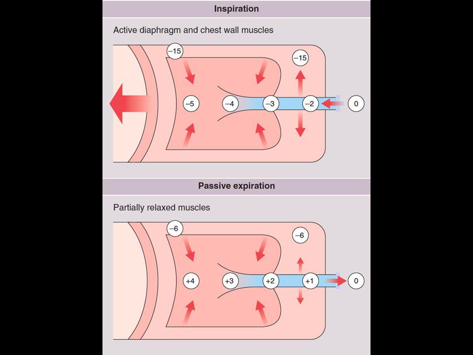 DIFUSI Peristiwa perpindahan : O 2 dari alveol ke kapiler dan CO 2 dari kapiler ke alveol