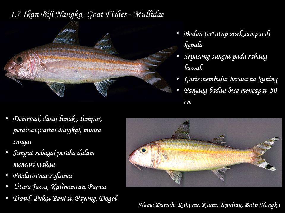 1.7 Ikan Biji Nangka, Goat Fishes - Mullidae Nama Daerah: Kakunir, Kunir, Kuniran, Butir Nangka Demersal, dasar lunak, lumpur, perairan pantai dangkal