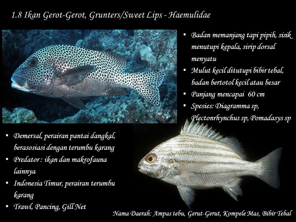 1.8 Ikan Gerot-Gerot, Grunters/Sweet Lips - Haemulidae Nama Daerah: Ampas tebu, Gerut-Gerut, Kompele Mas, Bibir Tebal Demersal, perairan pantai dangka