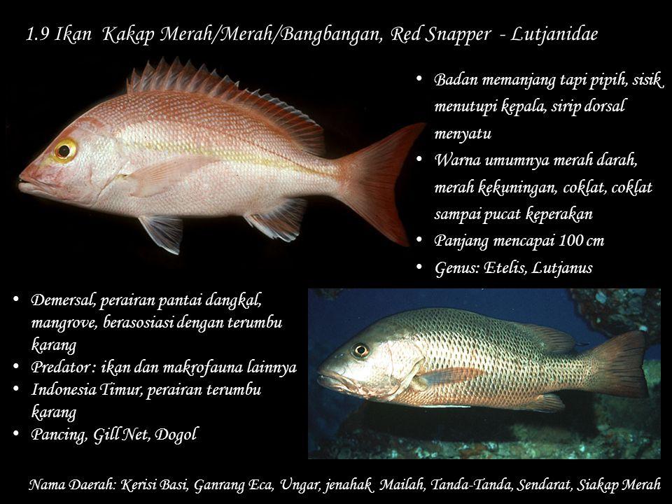 1.9 Ikan Kakap Merah/Merah/Bangbangan, Red Snapper - Lutjanidae Nama Daerah: Kerisi Basi, Ganrang Eca, Ungar, jenahak Mailah, Tanda-Tanda, Sendarat, S