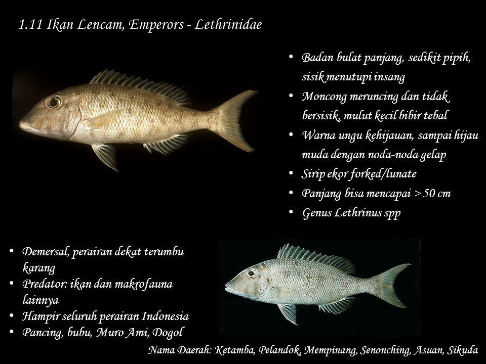 1.11 Ikan Lencam, Emperors - Lethrinidae Nama Daerah: Ketamba, Pelandok, Mempinang, Senonching, Asuan, Sikuda Demersal, perairan dekat terumbu karang