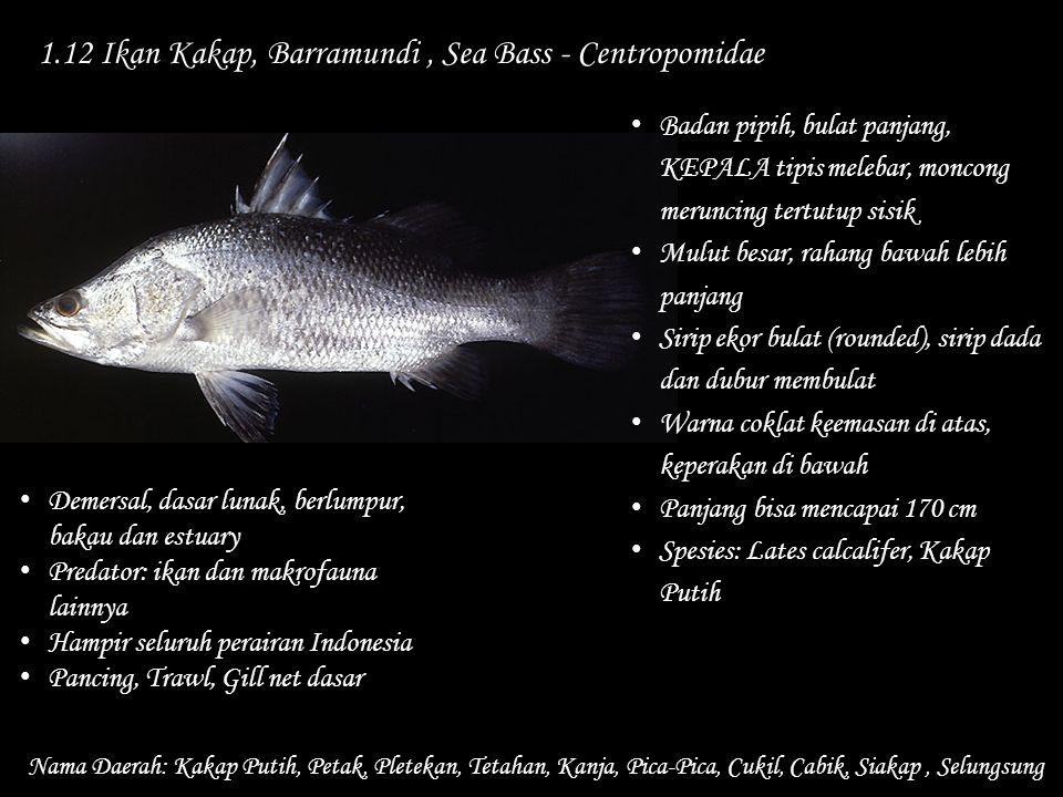 1.12 Ikan Kakap, Barramundi, Sea Bass - Centropomidae Nama Daerah: Kakap Putih, Petak, Pletekan, Tetahan, Kanja, Pica-Pica, Cukil, Cabik, Siakap, Selu