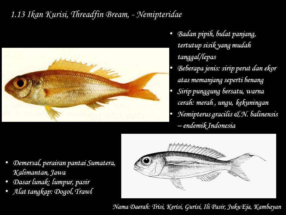 1.13 Ikan Kurisi, Threadfin Bream, - Nemipteridae Nama Daerah: Trisi, Kerisi, Gurisi, Ili Pasir, Juku Eja, Kambayan Demersal, perairan pantai Sumatera