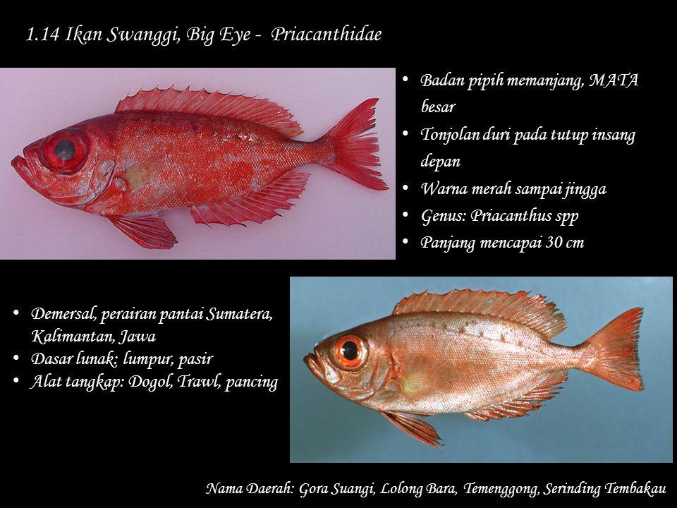 1.14 Ikan Swanggi, Big Eye - Priacanthidae Nama Daerah: Gora Suangi, Lolong Bara, Temenggong, Serinding Tembakau Demersal, perairan pantai Sumatera, K