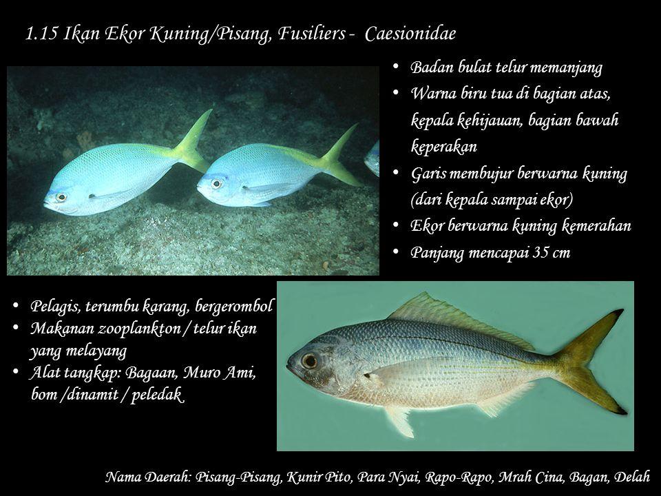 1.15 Ikan Ekor Kuning/Pisang, Fusiliers - Caesionidae Nama Daerah: Pisang-Pisang, Kunir Pito, Para Nyai, Rapo-Rapo, Mrah Cina, Bagan, Delah Pelagis, t