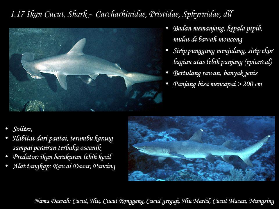 1.17 Ikan Cucut, Shark - Carcharhinidae, Pristidae, Sphyrnidae, dll Nama Daerah: Cucut, Hiu, Cucut Ronggeng, Cucut gergaji, Hiu Martil, Cucut Macan, M