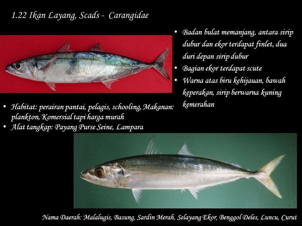 1.22 Ikan Layang, Scads - Carangidae Nama Daerah: Malalugis, Basung, Sardin Merah, Selayang Ekor, Benggol Deles, Luncu, Curut Habitat: perairan pantai