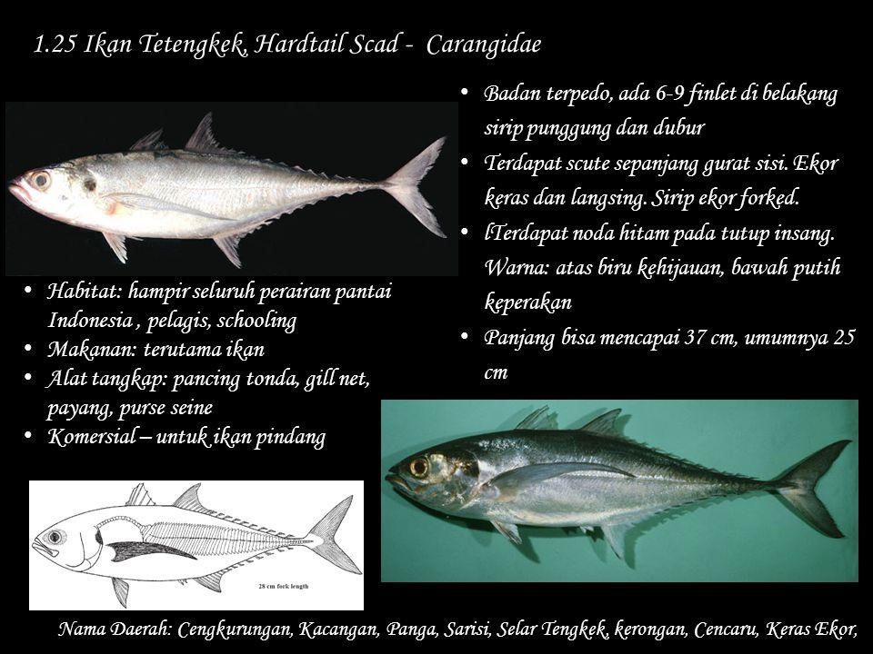 1.25 Ikan Tetengkek, Hardtail Scad - Carangidae Nama Daerah: Cengkurungan, Kacangan, Panga, Sarisi, Selar Tengkek, kerongan, Cencaru, Keras Ekor, Bada