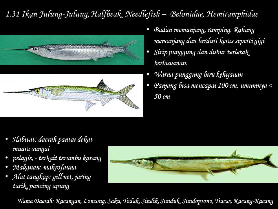 1.31 Ikan Julung-Julung, Halfbeak, Needlefish – Belonidae, Hemiramphidae Nama Daerah: Kacangan, Loncong, Saku, Todak, Sindik, Sunduk, Sundoprono, Trac