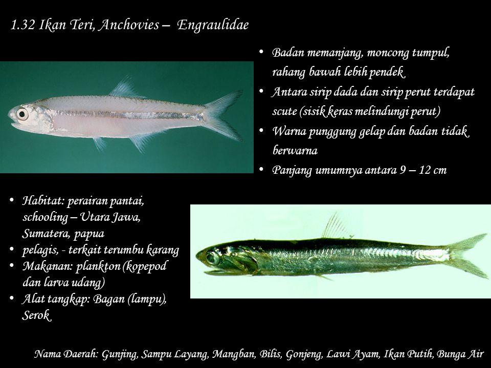 1.32 Ikan Teri, Anchovies – Engraulidae Nama Daerah: Gunjing, Sampu Layang, Mangban, Bilis, Gonjeng, Lawi Ayam, Ikan Putih, Bunga Air Habitat: peraira