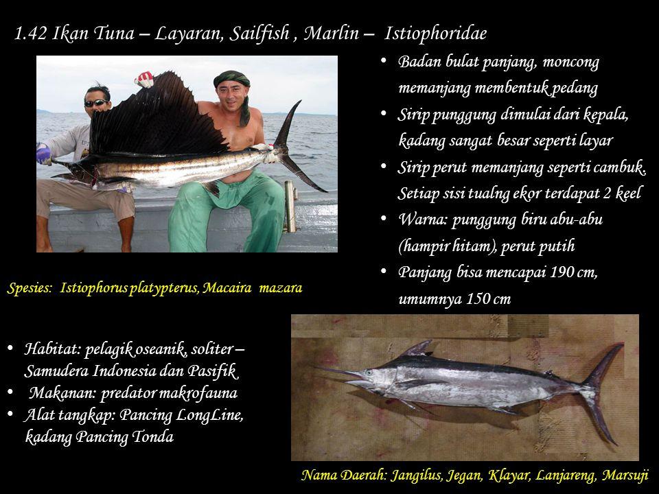 1.42 Ikan Tuna – Layaran, Sailfish, Marlin – Istiophoridae Nama Daerah: Jangilus, Jegan, Klayar, Lanjareng, Marsuji Habitat: pelagik oseanik, soliter