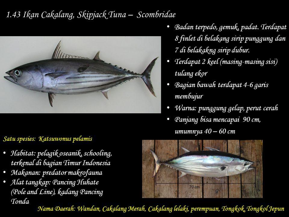 1.43 Ikan Cakalang, Skipjack Tuna – Scombridae Nama Daerah: Wandan, Cakalang Merah, Cakalang lelaki, perempuan, Tongkok, Tongkol Jepun Habitat: pelagi