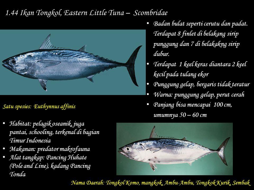 1.44 Ikan Tongkol, Eastern Little Tuna – Scombridae Nama Daerah: Tongkol Komo, mangkok, Ambu-Ambu, Tongkok Kurik, Sembak Habitat: pelagik oseanik, jug