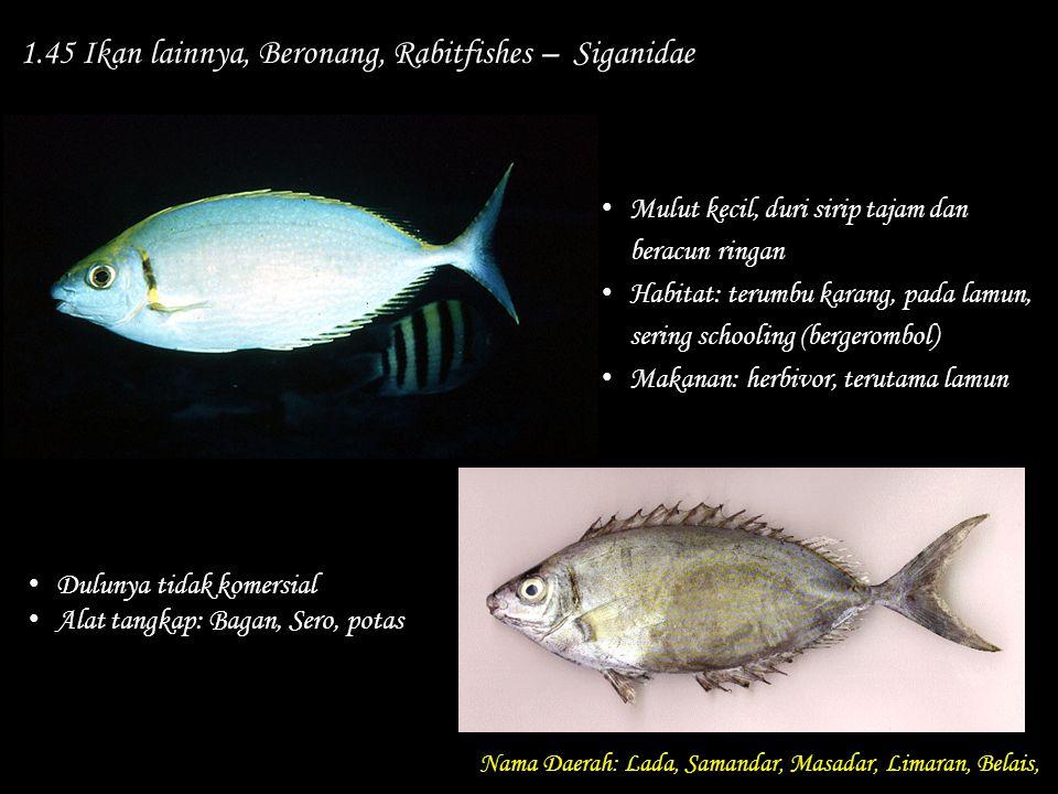 1.45 Ikan lainnya, Beronang, Rabitfishes – Siganidae Nama Daerah: Lada, Samandar, Masadar, Limaran, Belais, Dulunya tidak komersial Alat tangkap: Baga