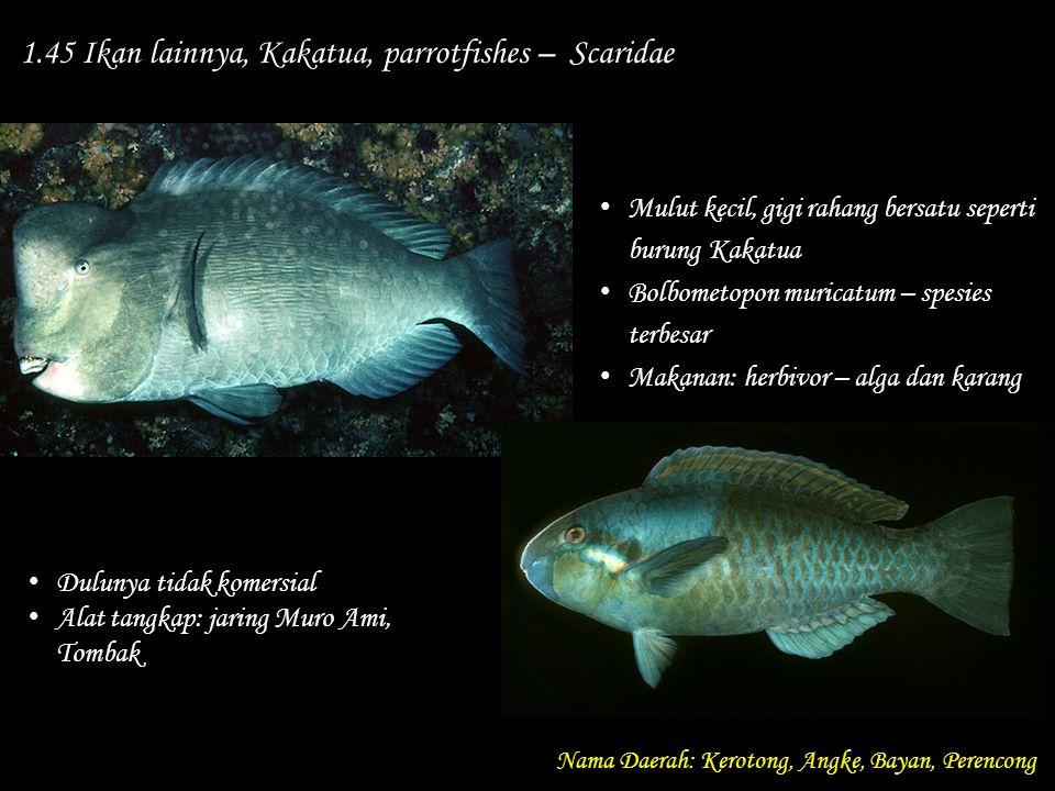 1.45 Ikan lainnya, Kakatua, parrotfishes – Scaridae Nama Daerah: Kerotong, Angke, Bayan, Perencong Dulunya tidak komersial Alat tangkap: jaring Muro A