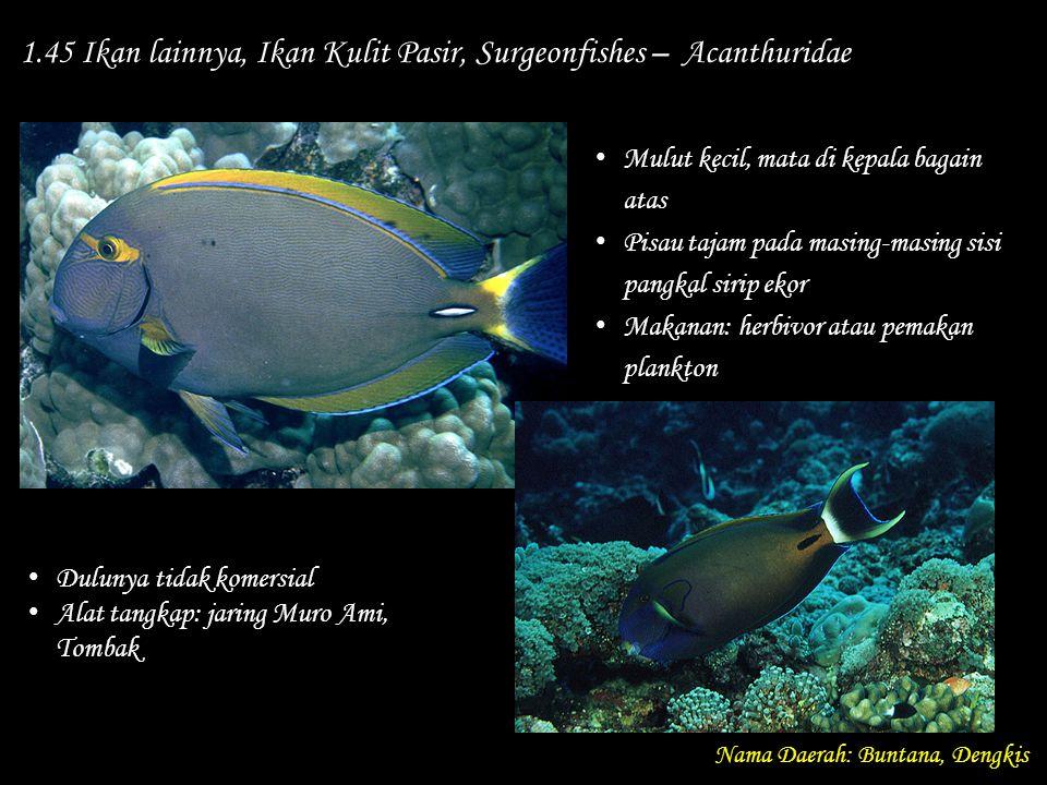 1.45 Ikan lainnya, Ikan Kulit Pasir, Surgeonfishes – Acanthuridae Nama Daerah: Buntana, Dengkis Dulunya tidak komersial Alat tangkap: jaring Muro Ami,