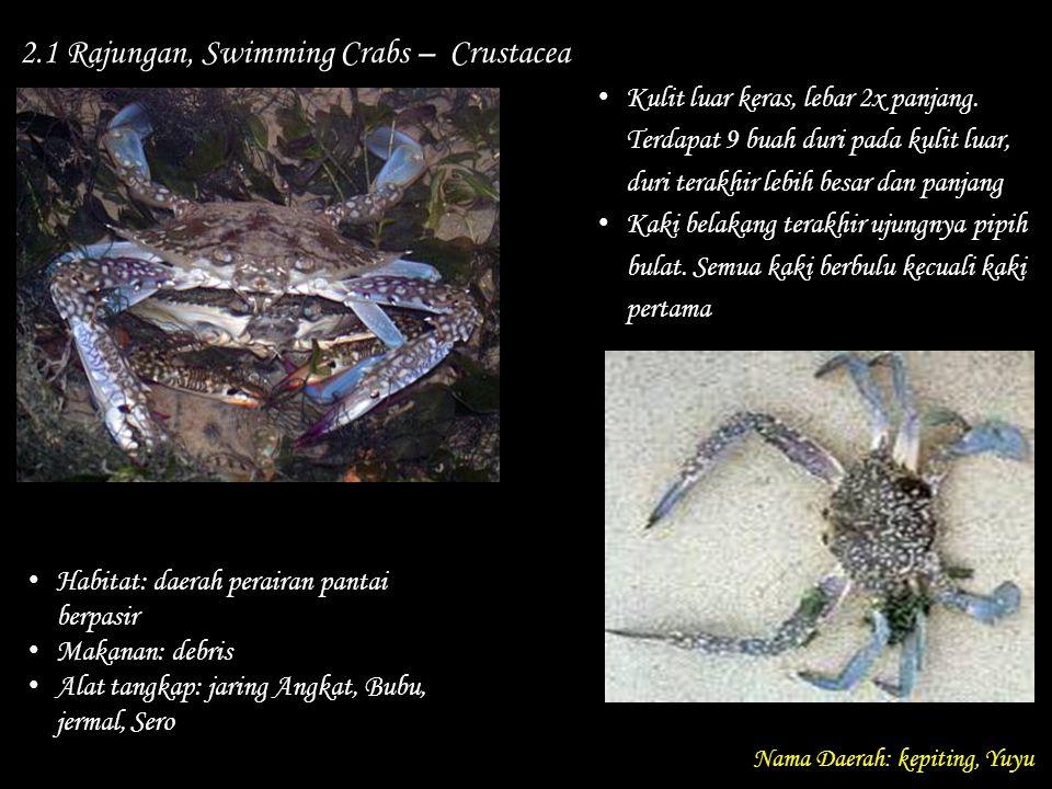 2.1 Rajungan, Swimming Crabs – Crustacea Nama Daerah: kepiting, Yuyu Habitat: daerah perairan pantai berpasir Makanan: debris Alat tangkap: jaring Ang