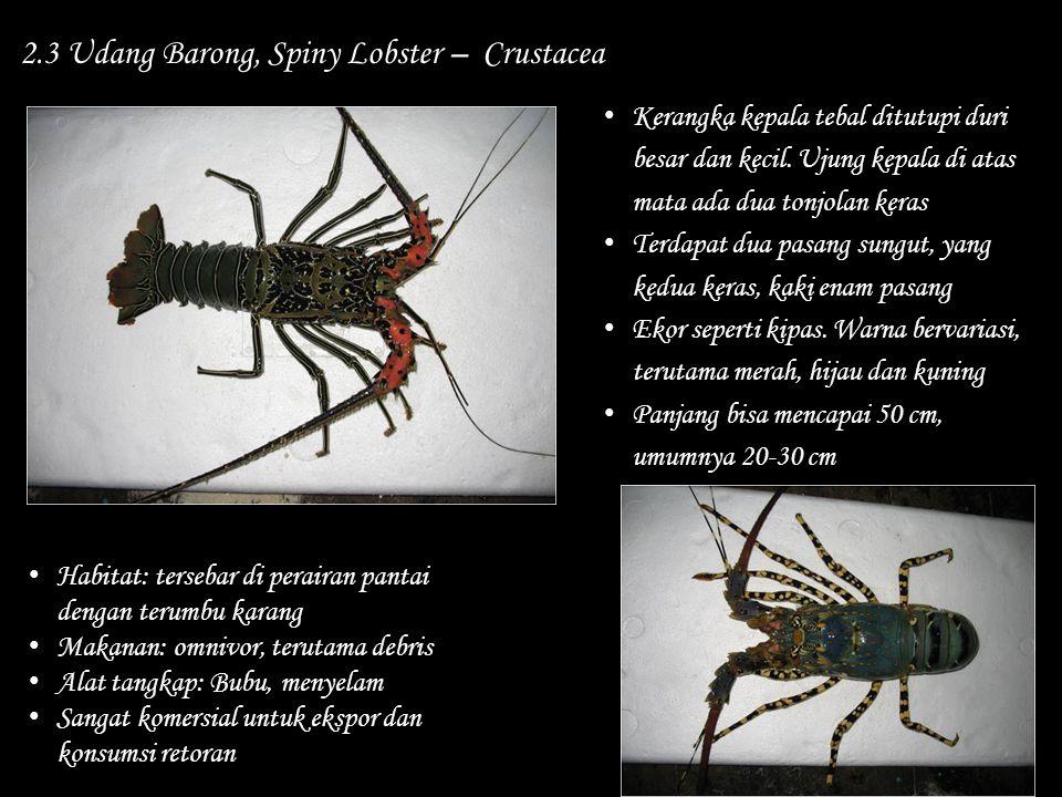 2.3 Udang Barong, Spiny Lobster – Crustacea Habitat: tersebar di perairan pantai dengan terumbu karang Makanan: omnivor, terutama debris Alat tangkap: