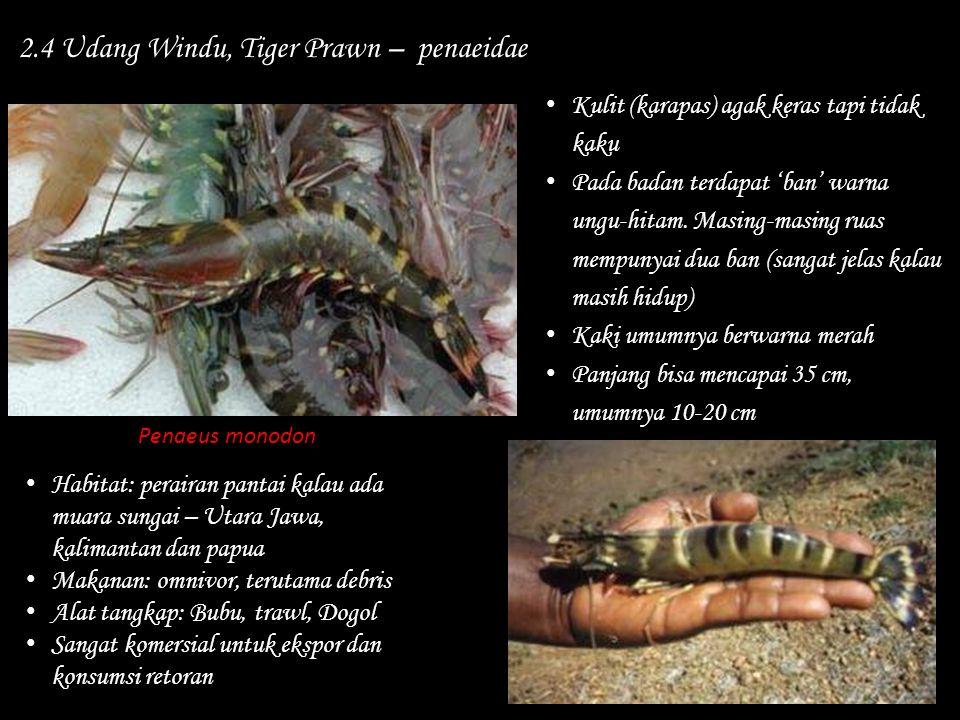 2.4 Udang Windu, Tiger Prawn – penaeidae Habitat: perairan pantai kalau ada muara sungai – Utara Jawa, kalimantan dan papua Makanan: omnivor, terutama