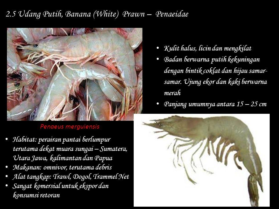 2.5 Udang Putih, Banana (White) Prawn – Penaeidae Habitat: perairan pantai berlumpur terutama dekat muara sungai – Sumatera, Utara Jawa, kalimantan da