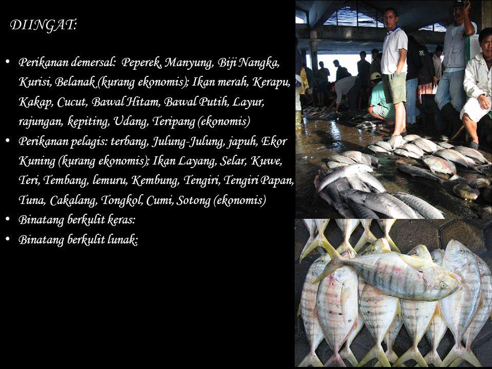 DIINGAT: Perikanan demersal: Peperek, Manyung, Biji Nangka, Kurisi, Belanak (kurang ekonomis); Ikan merah, Kerapu, Kakap, Cucut, Bawal Hitam, Bawal Pu