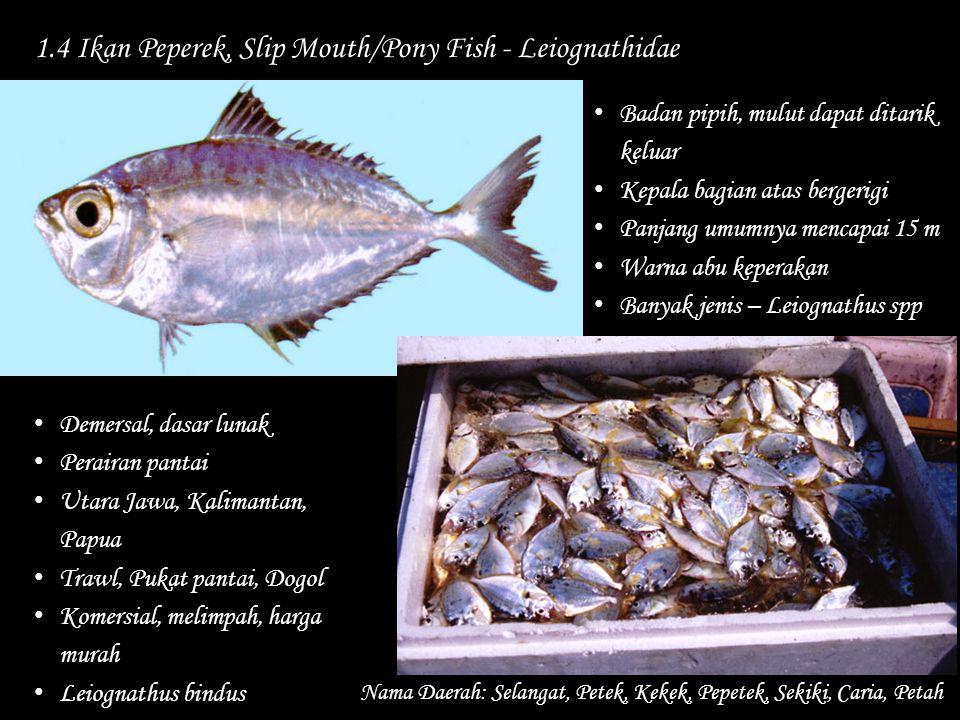 1.4 Ikan Peperek, Slip Mouth/Pony Fish - Leiognathidae Nama Daerah: Selangat, Petek, Kekek, Pepetek, Sekiki, Caria, Petah Badan pipih, mulut dapat dit