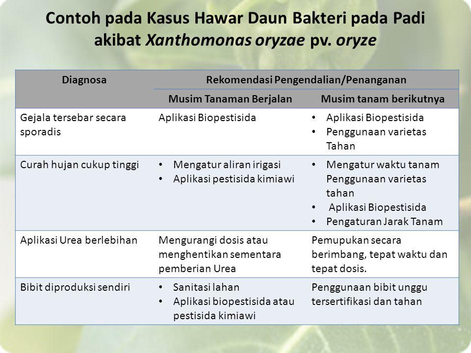 Contoh pada Kasus Hawar Daun Bakteri pada Padi akibat Xanthomonas oryzae pv. oryze DiagnosaRekomendasi Pengendalian/Penanganan Musim Tanaman BerjalanM