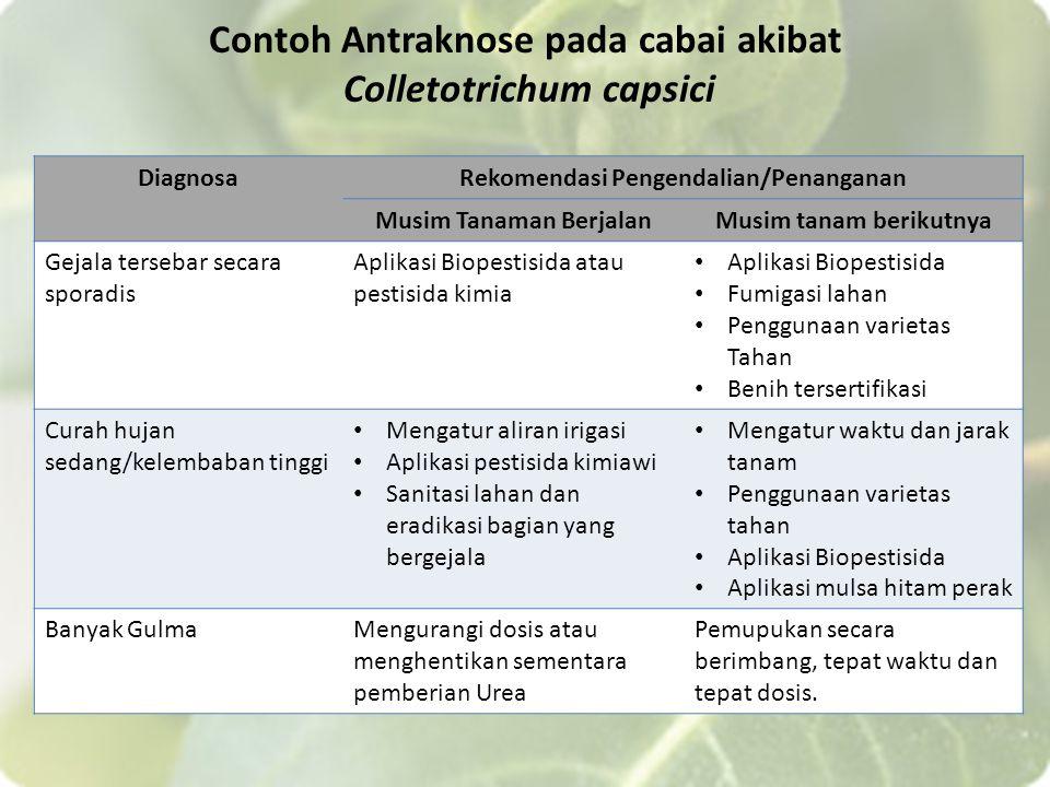 Contoh Antraknose pada cabai akibat Colletotrichum capsici DiagnosaRekomendasi Pengendalian/Penanganan Musim Tanaman BerjalanMusim tanam berikutnya Ge