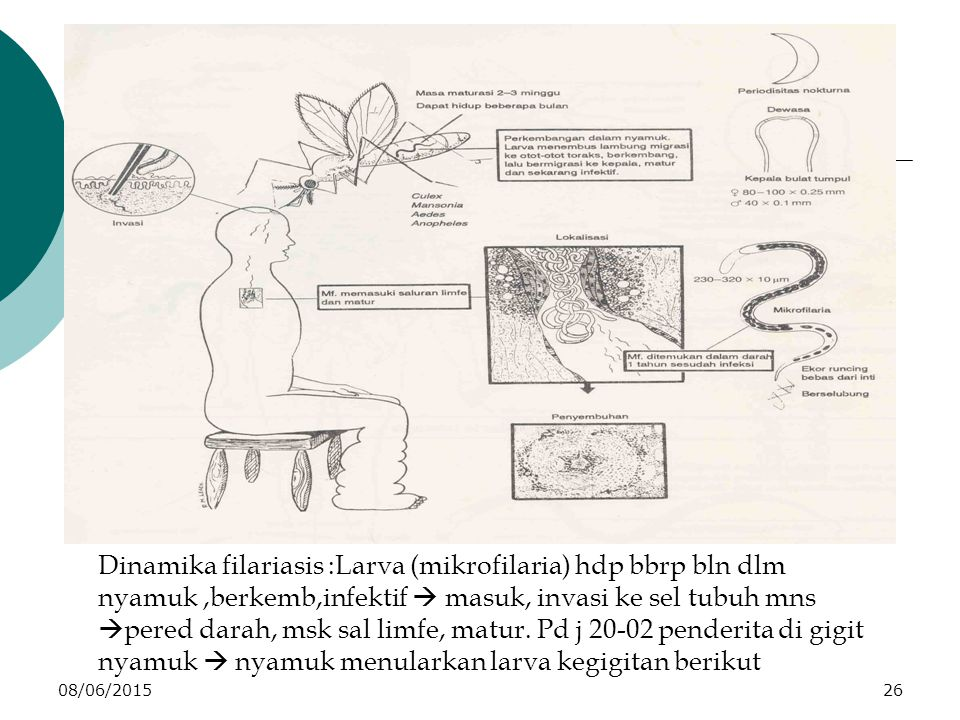 08/06/201526 Dinamika filariasis :Larva (mikrofilaria) hdp bbrp bln dlm nyamuk,berkemb,infektif  masuk, invasi ke sel tubuh mns  pered darah, msk sal limfe, matur.