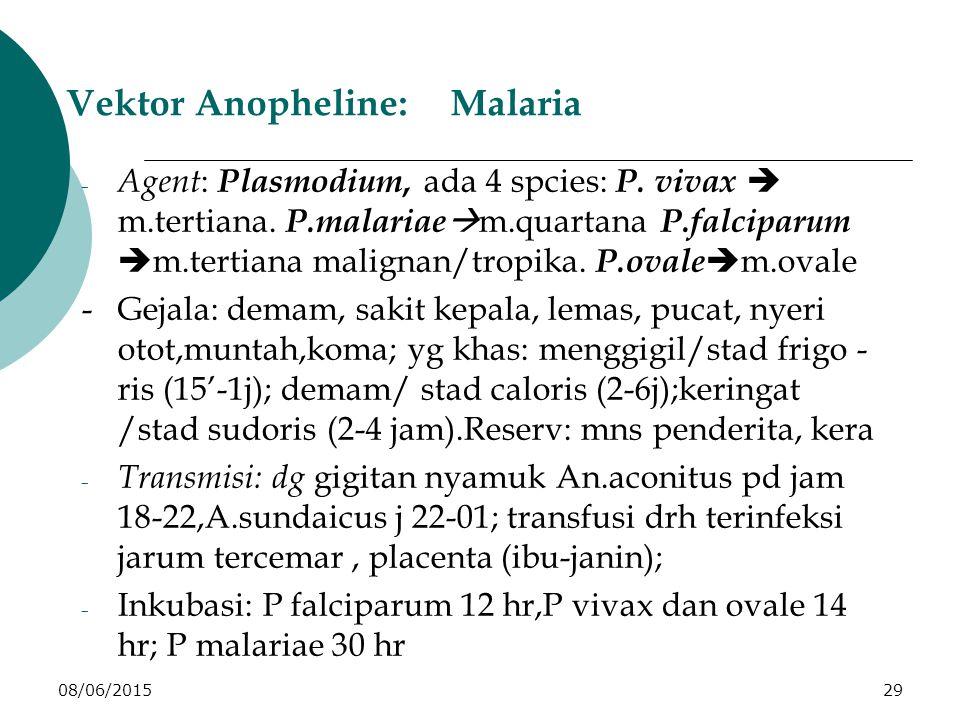 08/06/201529 Vektor Anopheline:Malaria - Agent : Plasmodium, ada 4 spcies: P.