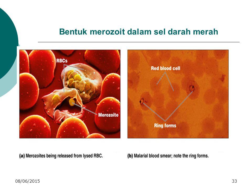 08/06/201533 Bentuk merozoit dalam sel darah merah