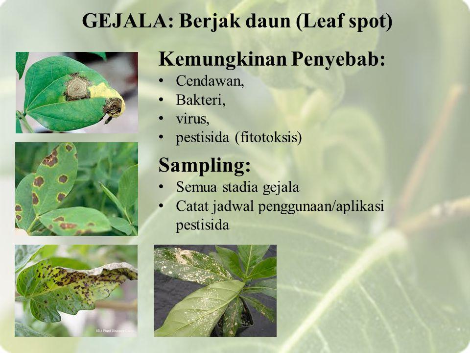 Kemungkinan Penyebab: Cendawan, Bakteri, virus, pestisida (fitotoksis) GEJALA: Berjak daun (Leaf spot) Sampling: Semua stadia gejala Catat jadwal penggunaan/aplikasi pestisida