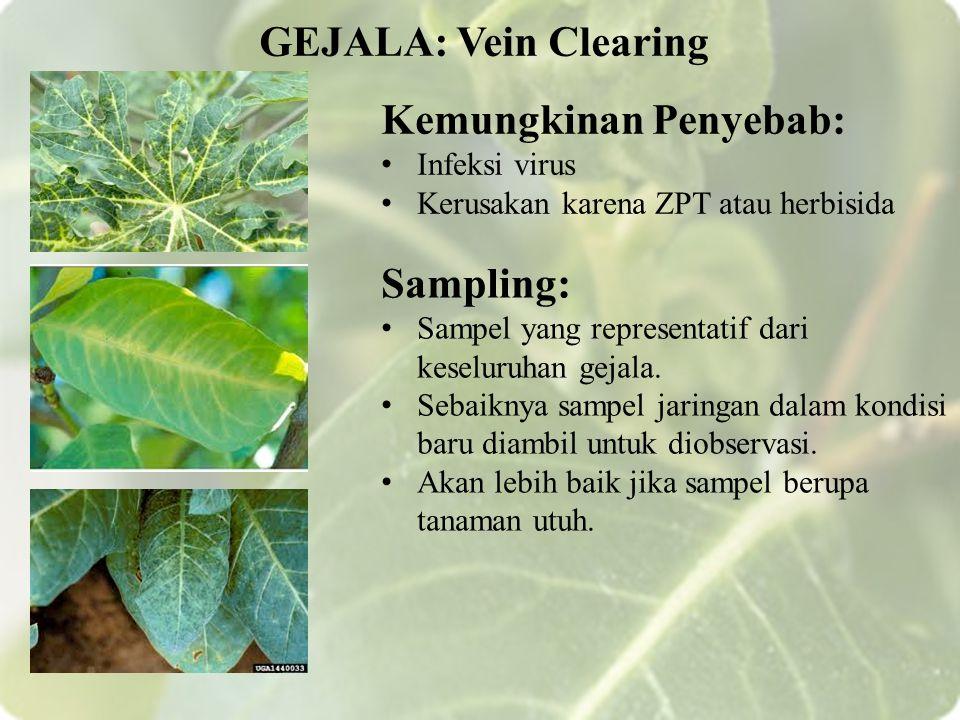 Kemungkinan Penyebab: Infeksi virus Kerusakan karena ZPT atau herbisida GEJALA: Vein Clearing Sampling: Sampel yang representatif dari keseluruhan gejala.
