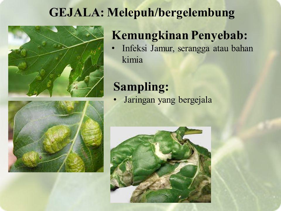 Kemungkinan Penyebab: Infeksi Jamur, serangga atau bahan kimia GEJALA: Melepuh/bergelembung Sampling: Jaringan yang bergejala