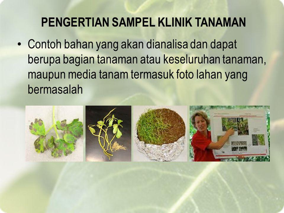 PENGERTIAN SAMPEL KLINIK TANAMAN Contoh bahan yang akan dianalisa dan dapat berupa bagian tanaman atau keseluruhan tanaman, maupun media tanam termasuk foto lahan yang bermasalah