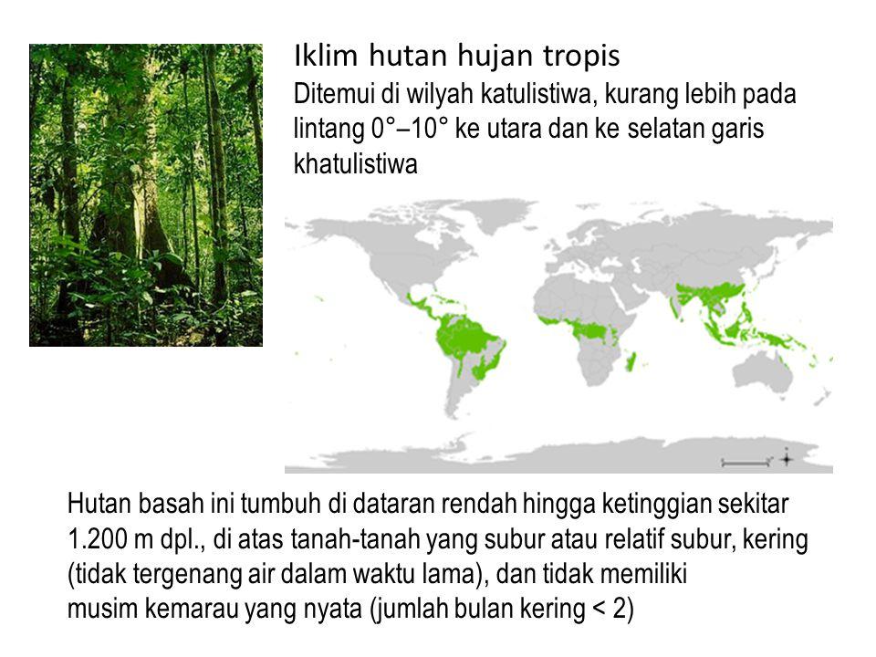 Hutan basah ini tumbuh di dataran rendah hingga ketinggian sekitar 1.200 m dpl., di atas tanah-tanah yang subur atau relatif subur, kering (tidak tergenang air dalam waktu lama), dan tidak memiliki musim kemarau yang nyata (jumlah bulan kering < 2) Iklim hutan hujan tropis Ditemui di wilyah katulistiwa, kurang lebih pada lintang 0°–10° ke utara dan ke selatan garis khatulistiwa