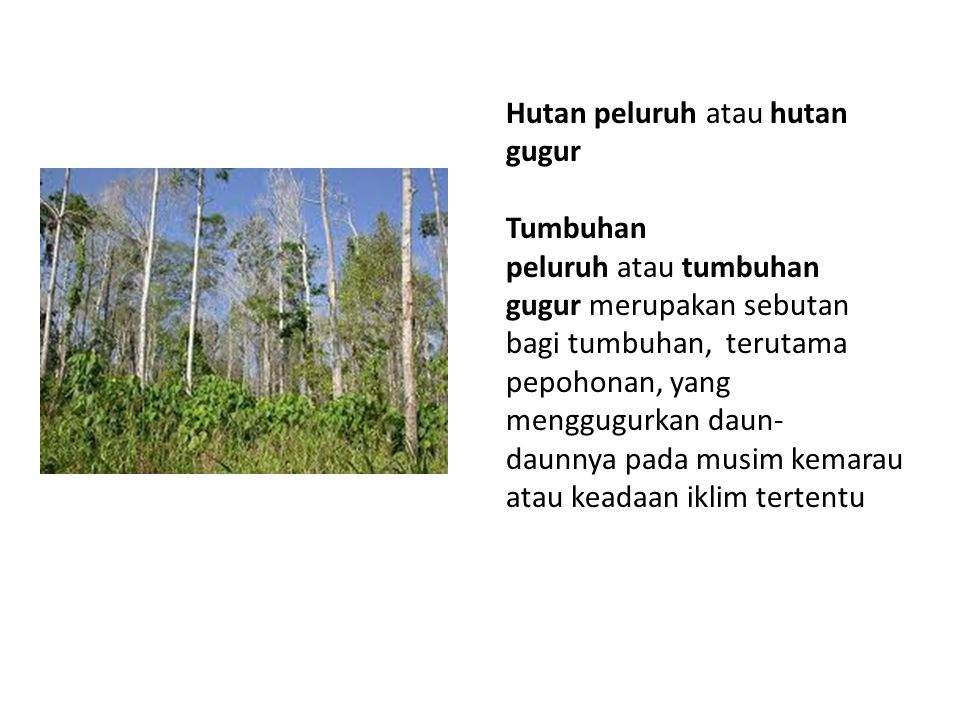 Hutan peluruh atau hutan gugur Tumbuhan peluruh atau tumbuhan gugur merupakan sebutan bagi tumbuhan, terutama pepohonan, yang menggugurkan daun- daunnya pada musim kemarau atau keadaan iklim tertentu